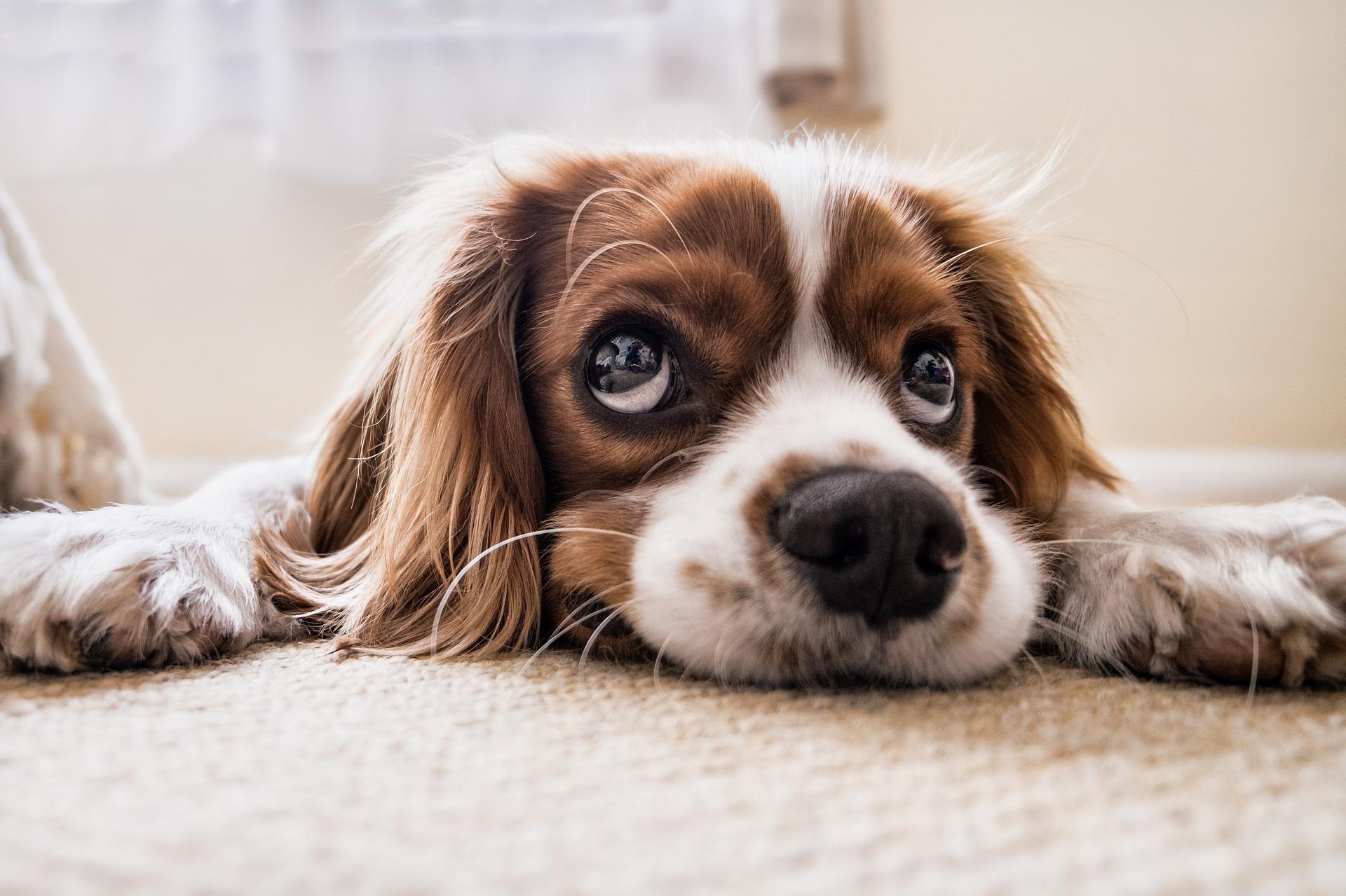 puppy oefeningen